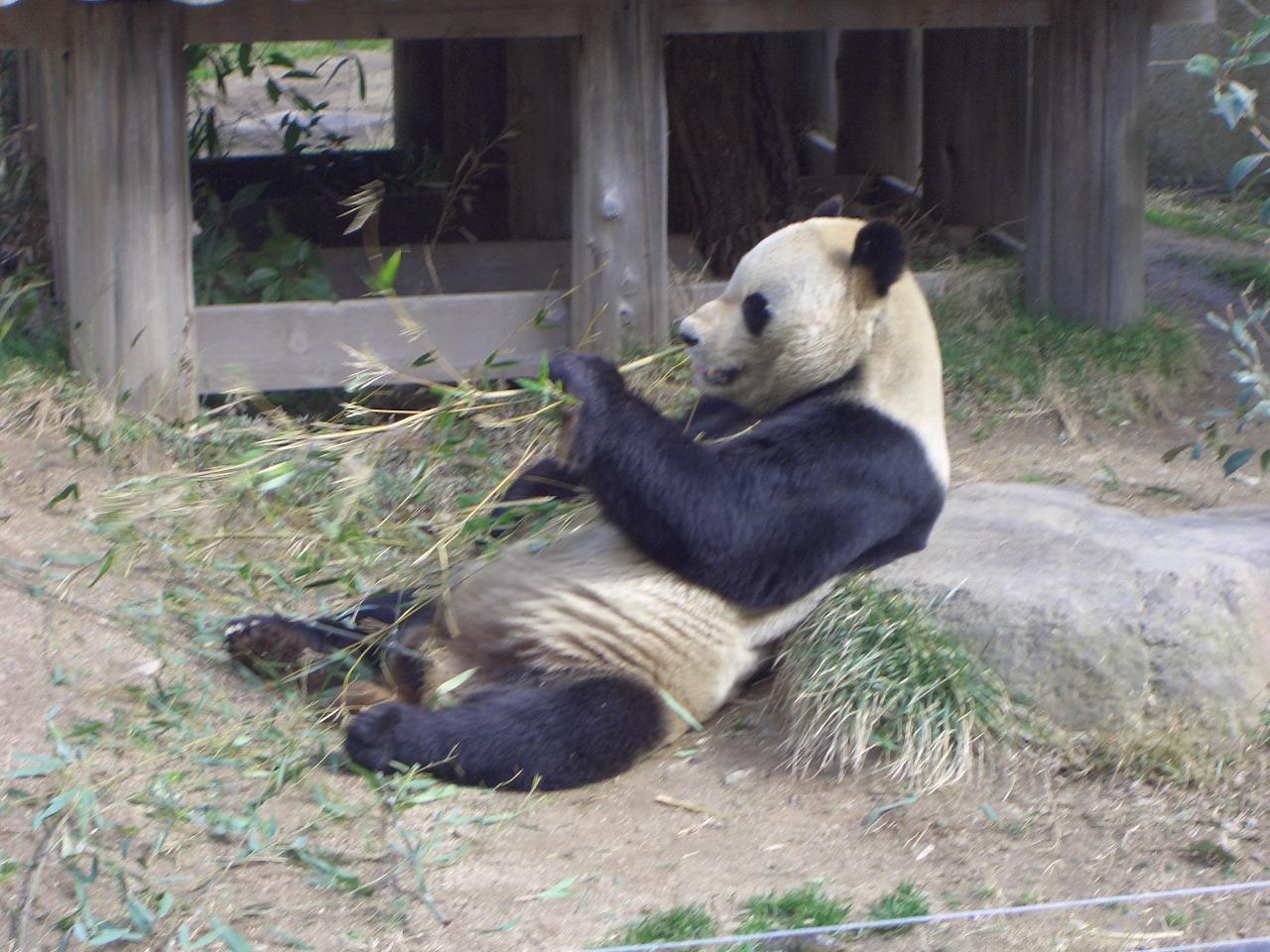 2009.2.21王子動物園 012.jpg
