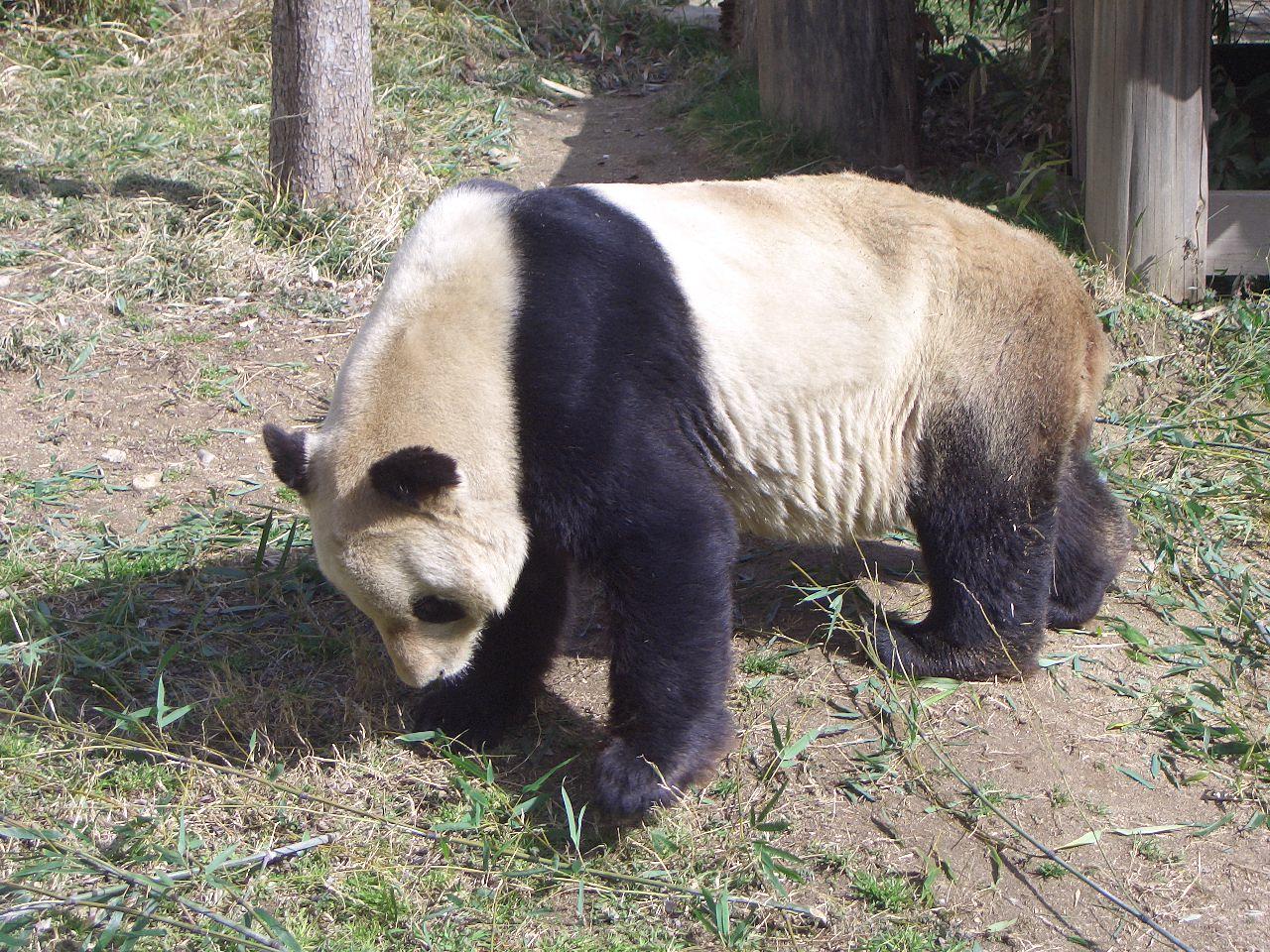 2009.2.21王子動物園 014.jpg