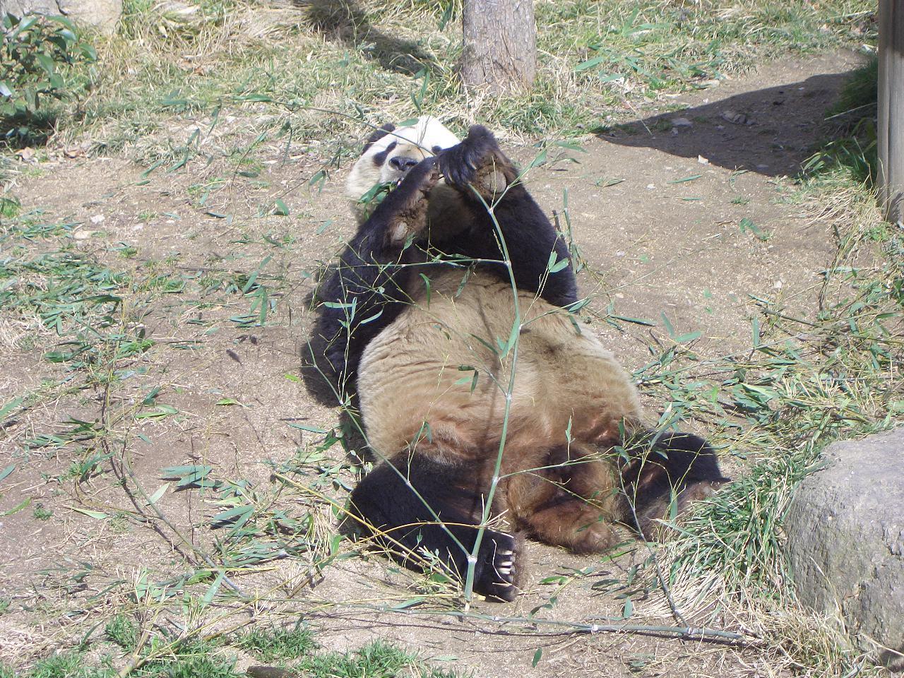 2009.2.21王子動物園 015.jpg