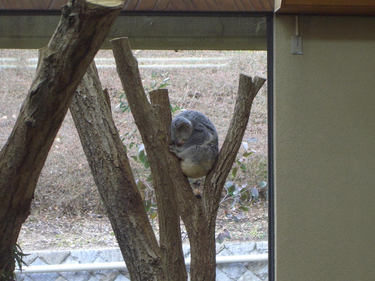 2009.2.21王子動物園 018.jpg