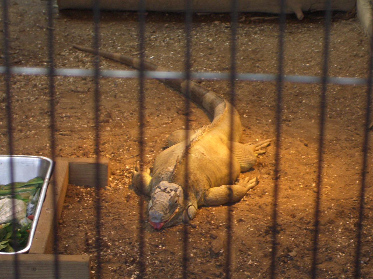 2009.2.21王子動物園 020.jpg