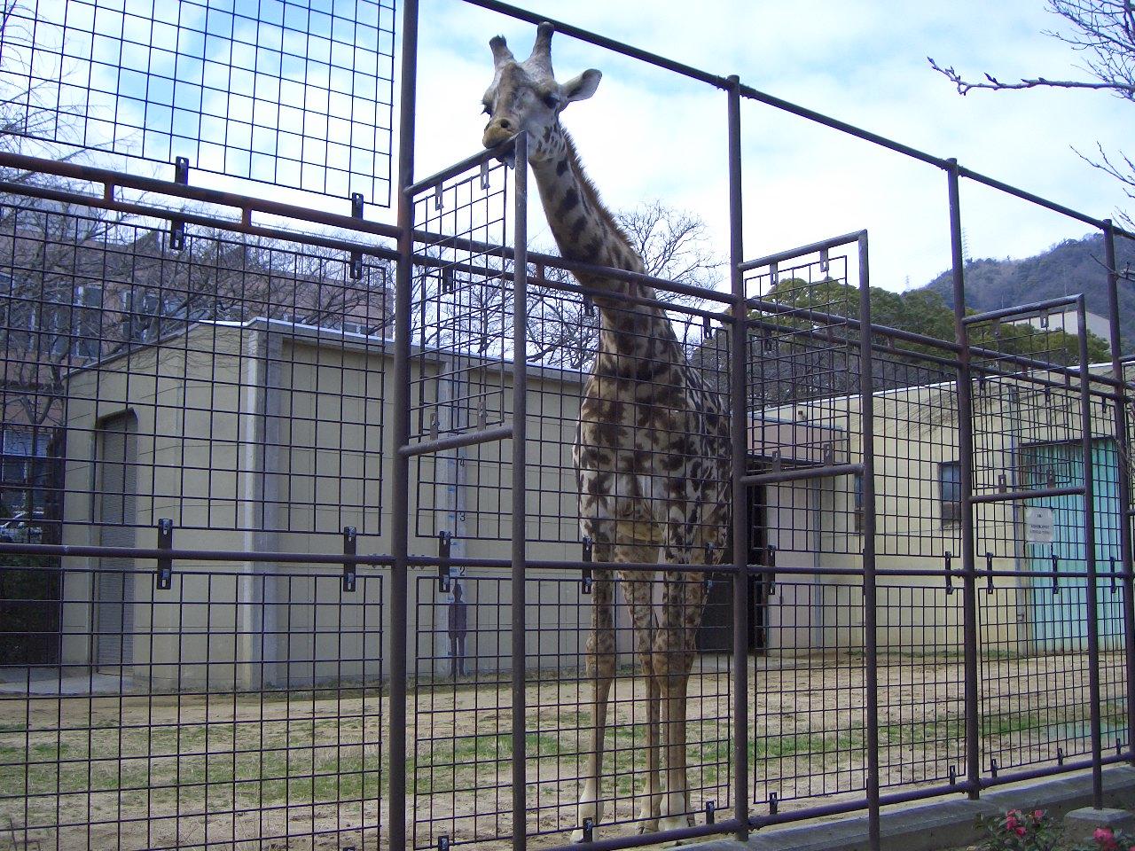2009.2.21王子動物園 022.jpg