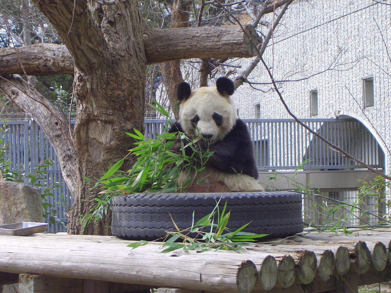 2009.2.21王子動物園 031.jpg