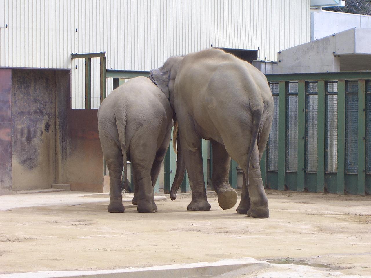 2009.2.21王子動物園 032.jpg