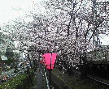 桜@武庫之荘2.jpg