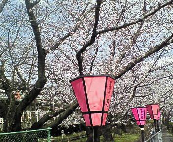 桜@武庫之荘3.jpg