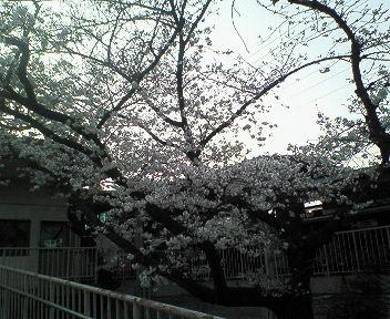 桜@武庫之荘4.jpg