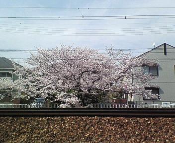 さくら武庫之荘駅前.jpg