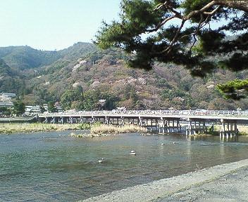 嵐山朝の渡月橋2.jpg