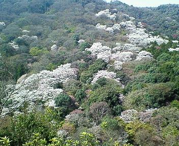嵐山展望台より.jpg
