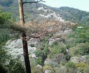 嵐山展望台より2.jpg