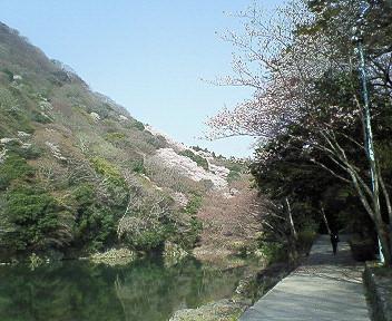 嵐山遊歩道.jpg